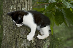 Black and white kitten in tree Stock Image