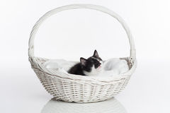 A Black and White Kitten in a White Basket Royalty Free Stock Images