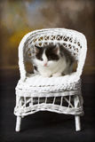 Black and White Kitten on Wicker Chair Stock Photo