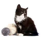 Black-and-white kitten with a woolen balls. On a white background Stock Images