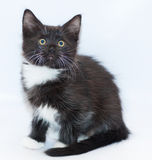 Black and white kitten with yellow eyes sitting looking up Stock Images
