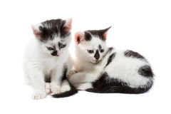 Black and white kittens Royalty Free Stock Photos