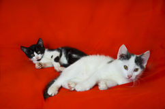 Black & white kittens. Black & white kittens with red background Stock Images