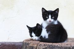 Kittens lying on a block of wood at a farm in Bohinj, Slovenia royalty free stock images