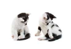 Black and white kittens sitting Royalty Free Stock Photos