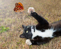 Black and white kitty cat playing with a butterfly. Black and white kitty cat playing with an orange butterfly in flight stock images