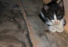 Black and white kitty stock photo