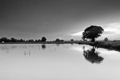 Black and white of lake around trees Stock Images