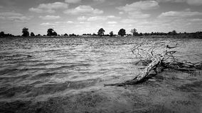 Black and white lake. Drift wood in lake Stock Image