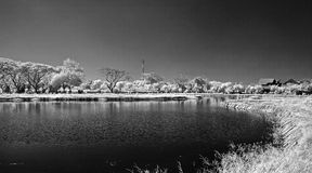 Black and white of lake in Surabaya. Taken at ITS campus, Surabaya, east Java, Indonesia Stock Photos