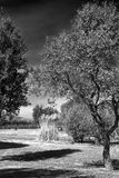 Black and white landscape Royalty Free Stock Photography