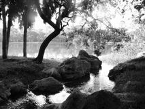 Black and white landscape. A black and white landscape of trees, rocks and water of a small brook or stream as it enters into a larger lake or river. Soft royalty free stock images