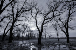 Black and white landscape - autumn forest and swamp Stock Photography
