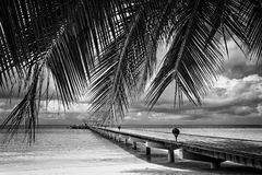 Black and white landscape exotic. Islands Maldives Stock Photography