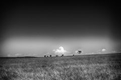 Black and white landscape with a family of elephants in the horizon royalty free stock image
