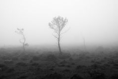 Black and white landscape with fog.  Stock Photos
