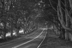 Black and white landscape image of road leading through Autumn F Stock Photos
