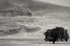 Black and White Landscape with Tree Stock Images