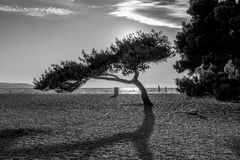 Black-and-white landscape with the tree Stock Photos
