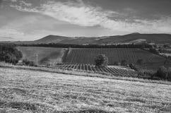 Black and white landscape. Tuscany, Italy Royalty Free Stock Photography