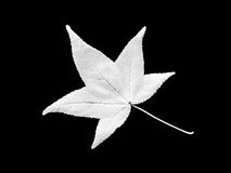 Black and White Leaf Royalty Free Stock Photos