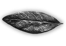 Black and White Leaf Royalty Free Stock Images