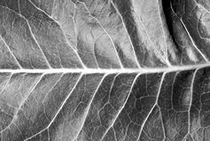 Black and white leaf texture Royalty Free Stock Photo