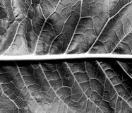 Black and white leaf texture. Stock Photos