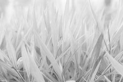 Black and white Leaves of grass Stock Images