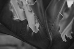 Black and white leaves. Black and white macro image with focus on leaves Stock Photography