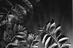 Black and white leaves pattern Royalty Free Stock Photos