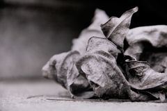 Black and white leaves, Withered leaf. Black and white leaves, China,Withered leaf Royalty Free Stock Photography