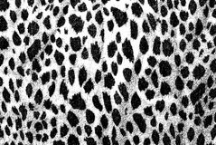Black and White Leopard Background. Exotic black and white background made from leopard print royalty free stock photos