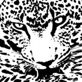 Black and white leopard skin texture royalty free illustration