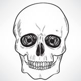 Human Skull. Black and white line art illustration of human skull Royalty Free Stock Photo