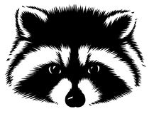 Black and white linear paint draw raccoon illustration Royalty Free Stock Images