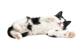 Black and white little kitten Stock Photo