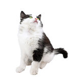 black and white little kitten Stock Photos