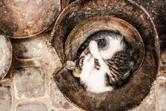 Black and White Long Coat Cat Sleeping on Brown Container Stock Image