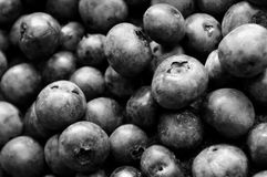 Black and white of lots of blueberries stock images