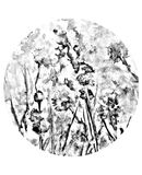 Black white сlover. Clover and grass in the woods. Graphic arts. Shabby Royalty Free Stock Photography