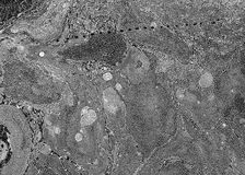 Black and white marble background Royalty Free Stock Image