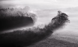 Black and white mist landscape Stock Photos
