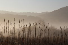Black and White Misty Morning Marsh Driftless Midwest Royalty Free Stock Photo
