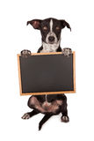 Black and White Mixed Breed Dog Begging Royalty Free Stock Photos