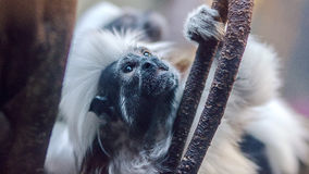 Black and White Monkey on Tree Branch during Daytime Stock Photos