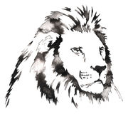 Black and white monochrome painting with water and ink draw lion illustration Royalty Free Stock Photos