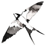 Black and white monochrome painting with water and ink draw swallow bird illustration Stock Photography