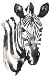 Black and white monochrome painting with water and ink draw zebra illustration stock illustration