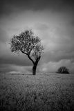 Black White Moody Atmospheric Tree in Countryside. Black & white atmospheric  countryside with an unusual & unique shaped bare branch leafless tree standing Stock Image